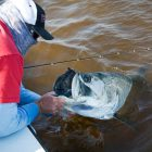 Captain Andy Thompson lands a big tarpon
